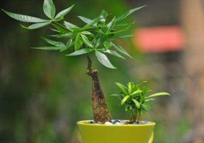 植物都能被影响,何况是人?