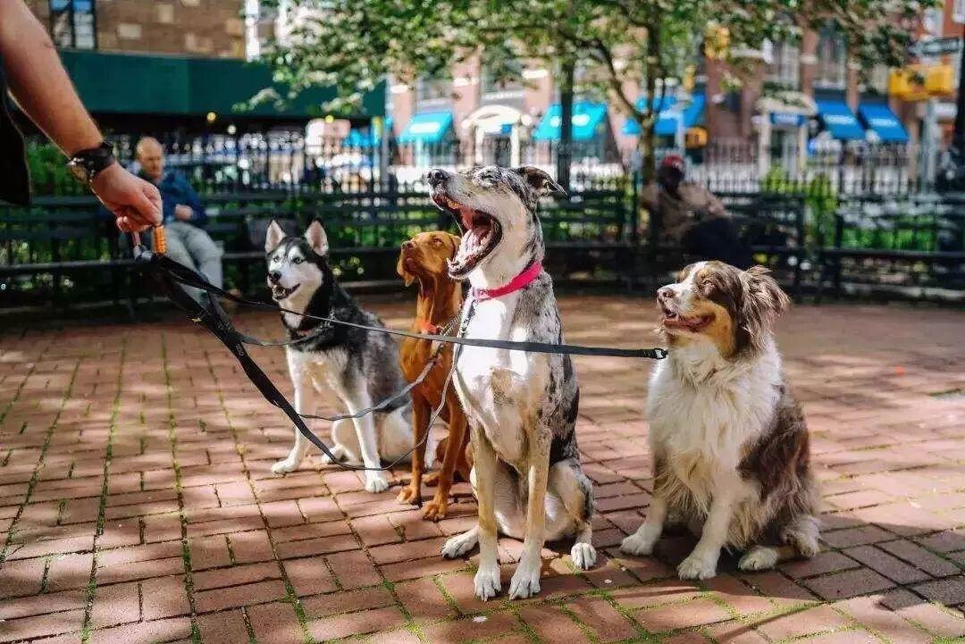 宠物一年消费超五千元!宠物经济到底有多赚钱呢?  第1张